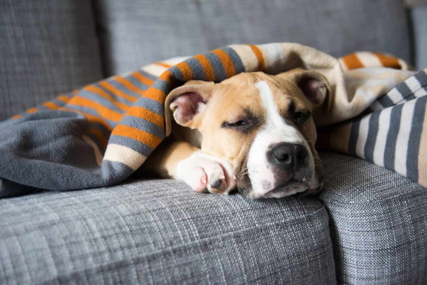 Some essential oils can help a dogs cough, but it doesn't replace a visit to the vet.