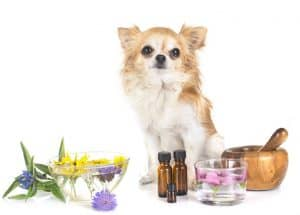 dog next to essential oils that will help treat his pain