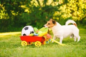 dog playing with a lot of toys