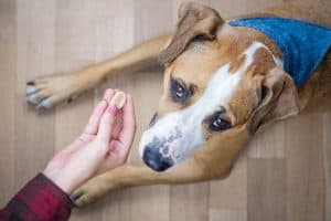 apologizing to a dog using treats