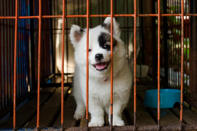 It's possible to crate train a puppy in an apartment if you go at it correctly.