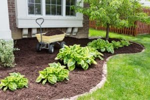 a bunch of mulch that dogs like eating