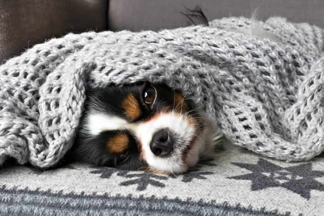 Dogs bury their heads for a variety of reasons. Here are the most common.