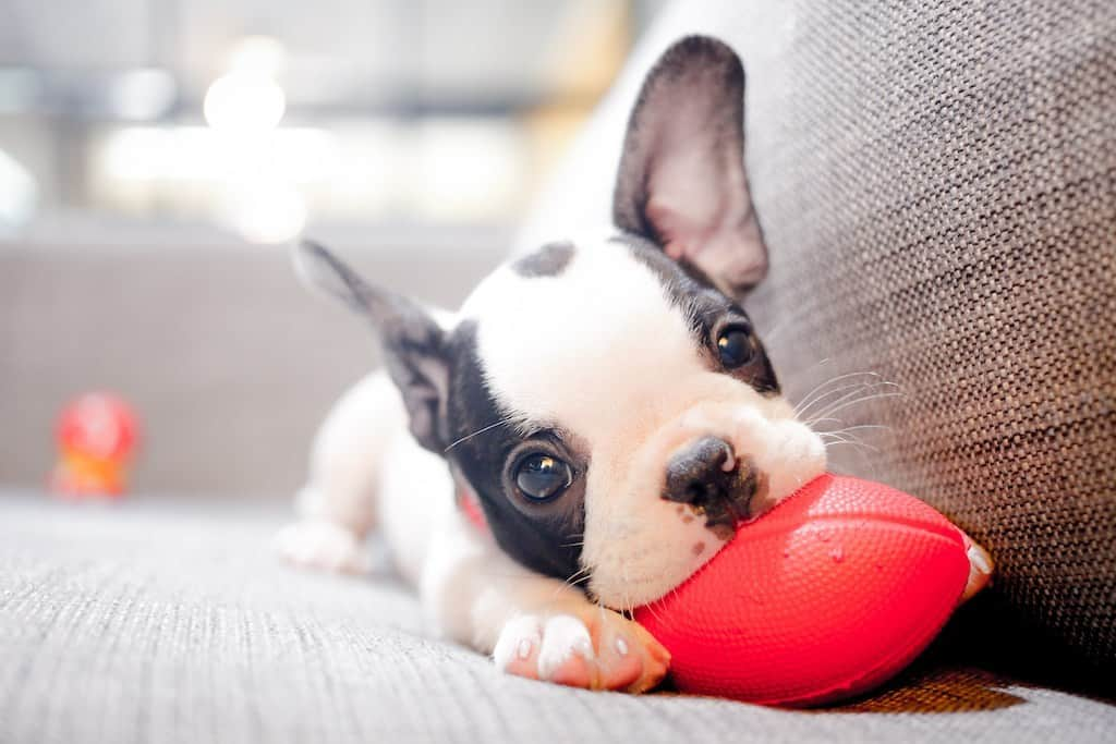 We know puppies drool a lot, but have you ever wondered why?