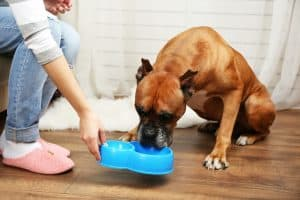 dog is chewing on a plastic bowl