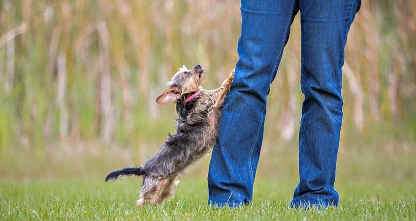 If you have a dog that keeps jumping on you, you're probably wondering why. The answer is simple!