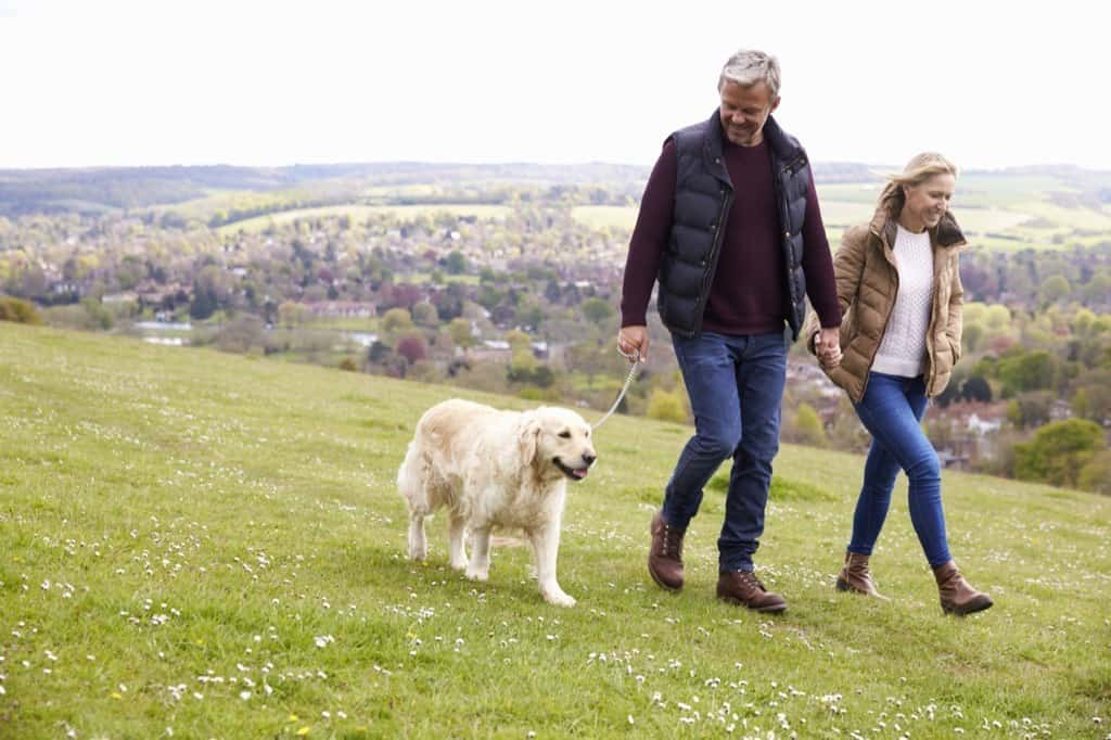 dogs walk behind their humans because they want to explore the world