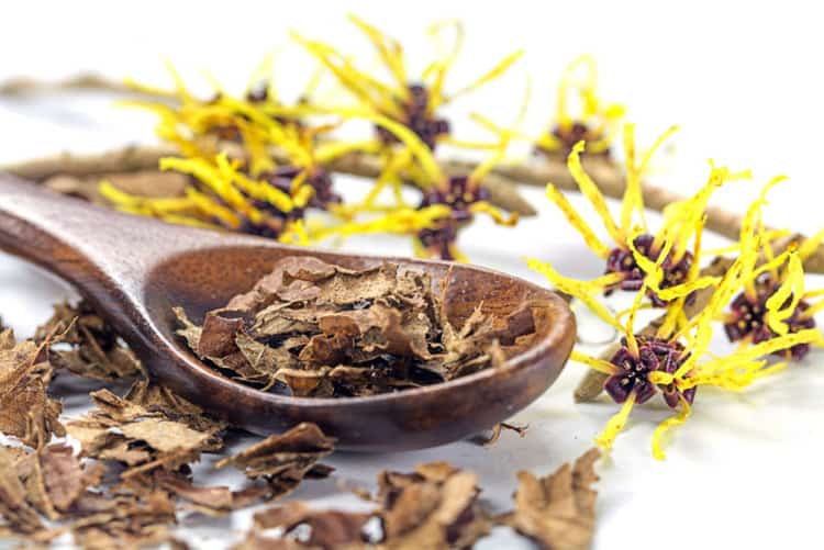 Can witch hazel be used for dog hot spots? The effects are surprising