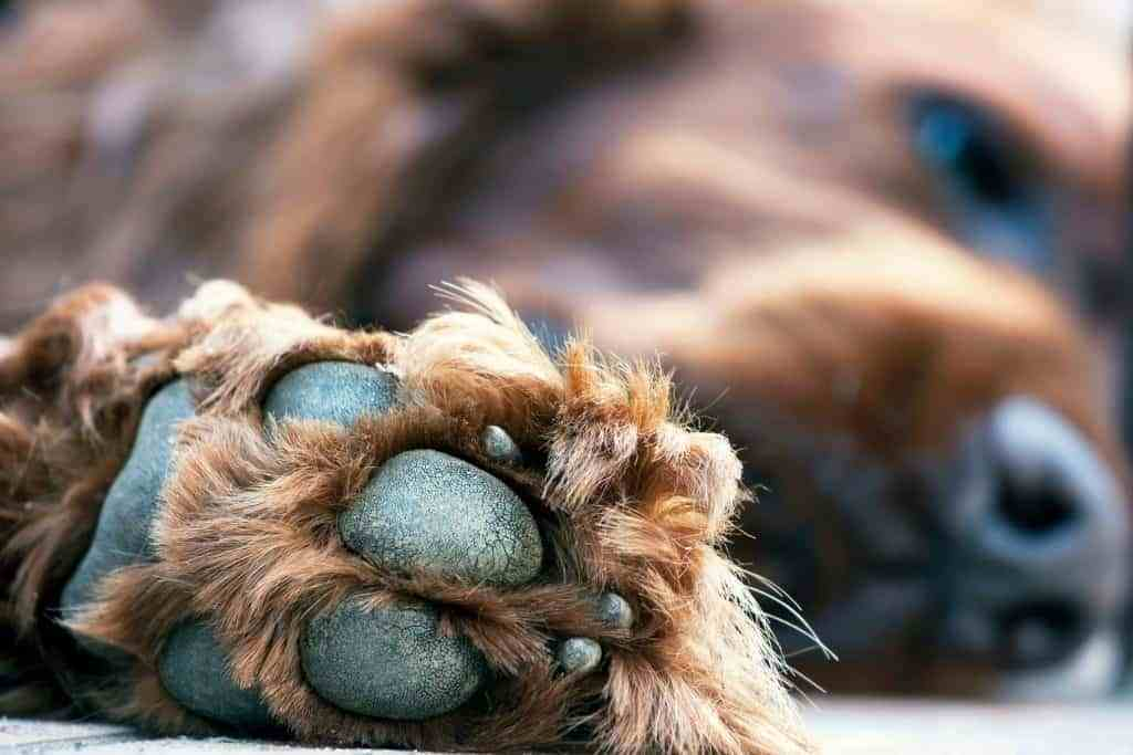 close up of dog paw pads