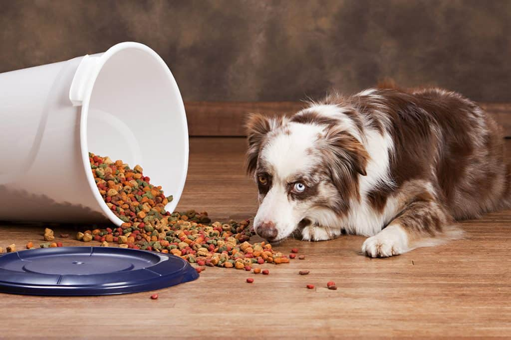 dog eating food out of the storage