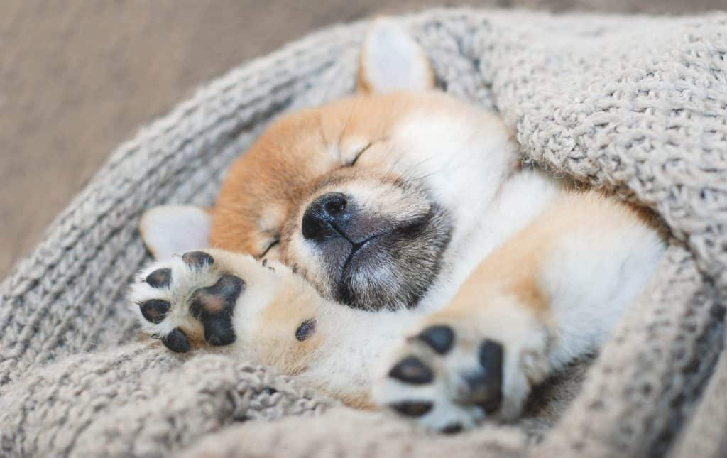 tired puppy getting some rest