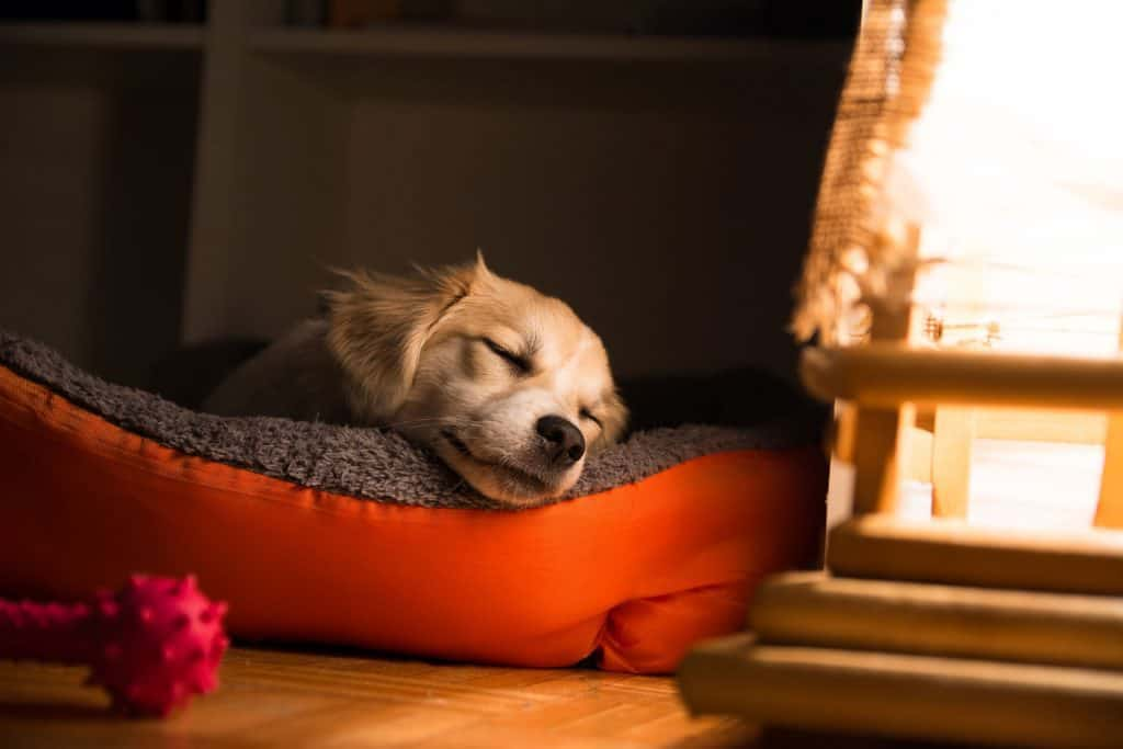 puppy sleeping on bed by the fire