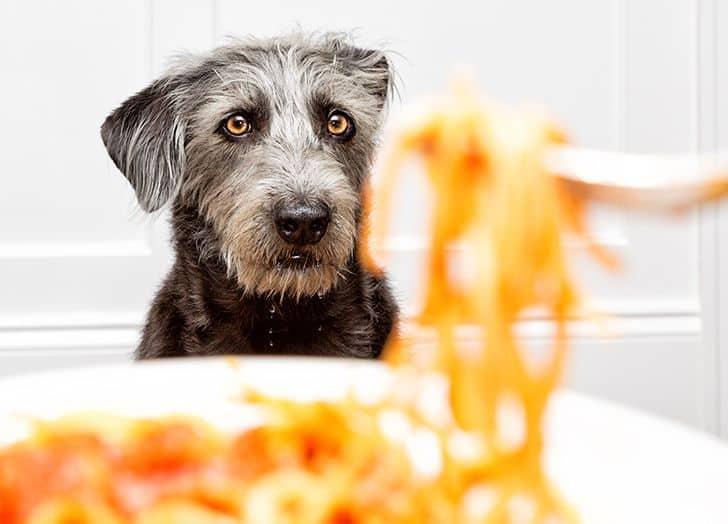 dog looking at food and drooling