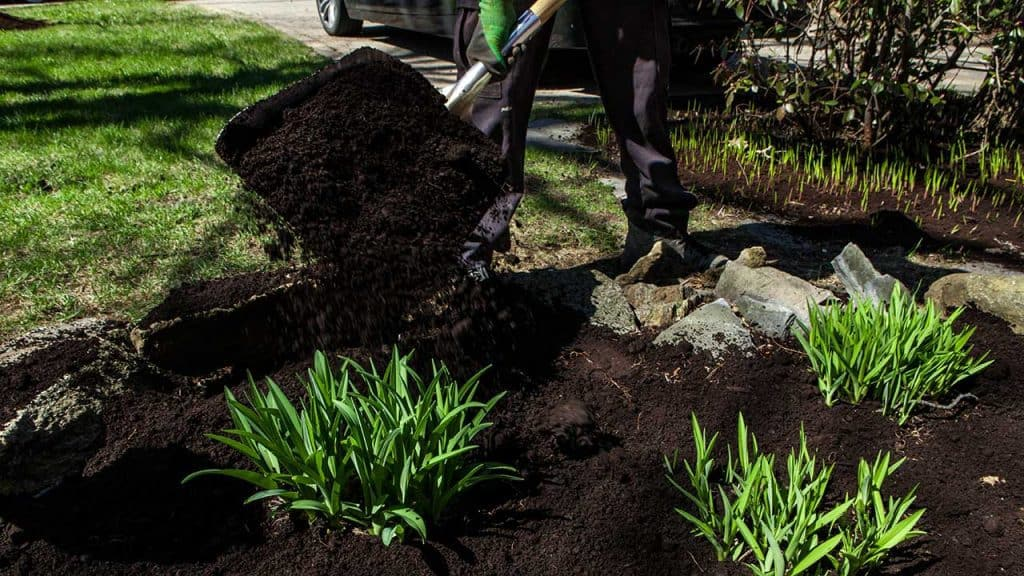 shoveling black mulch into garden