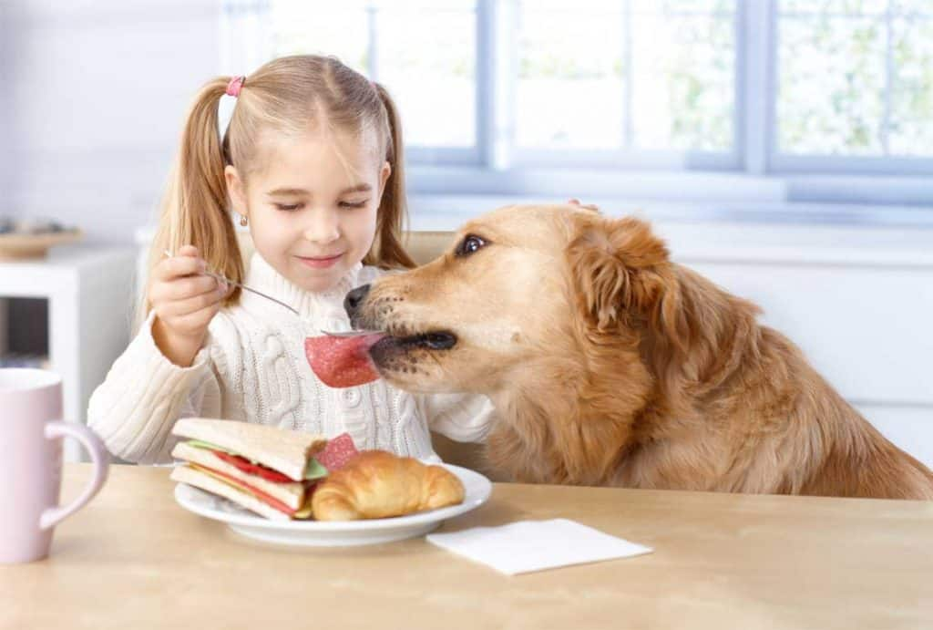 dog eating lunch meat from girls sandwich