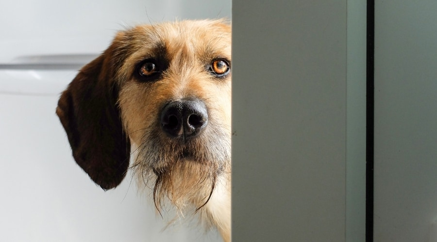 dog standing by the door