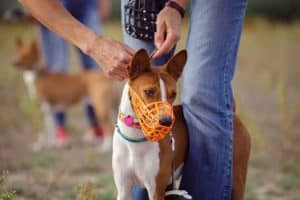 dog wearing a muzzle to stop barking