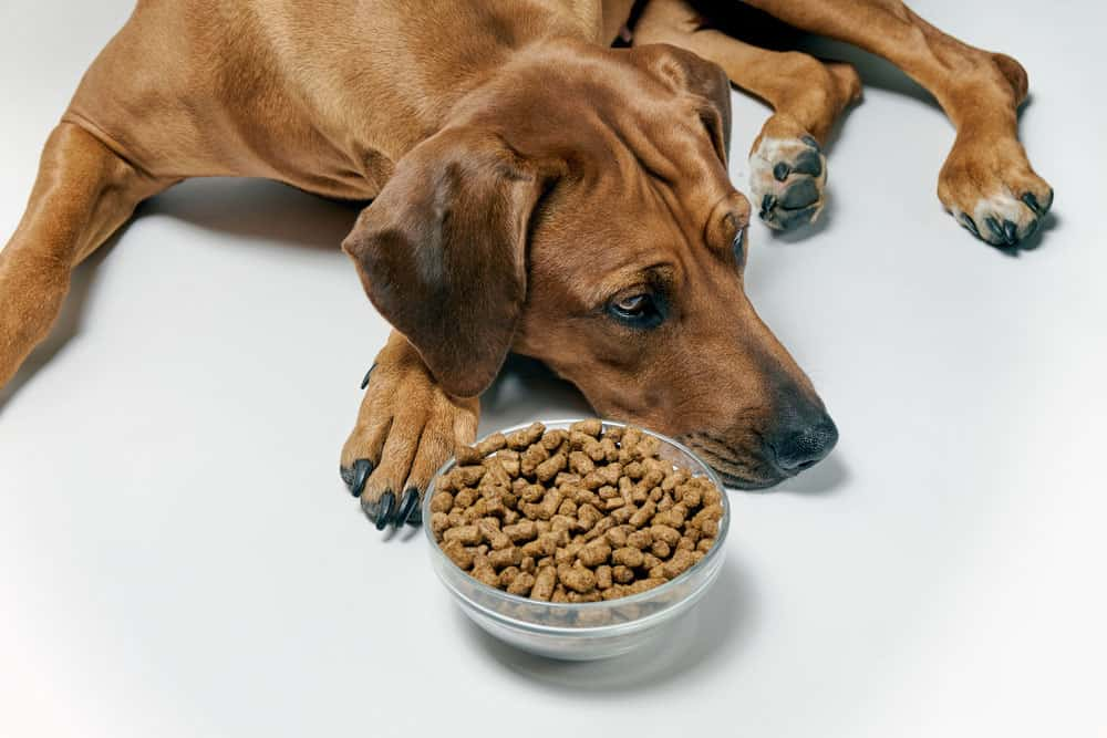 dog refusing bowl of food in the morning