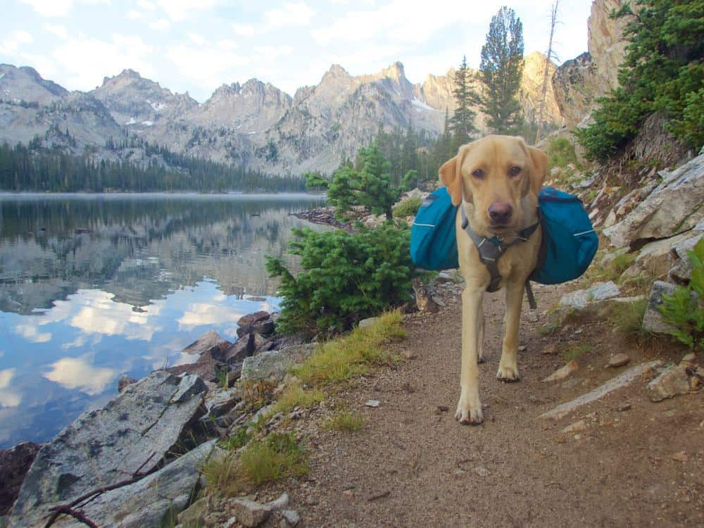 dog carrying backpack in the mountains