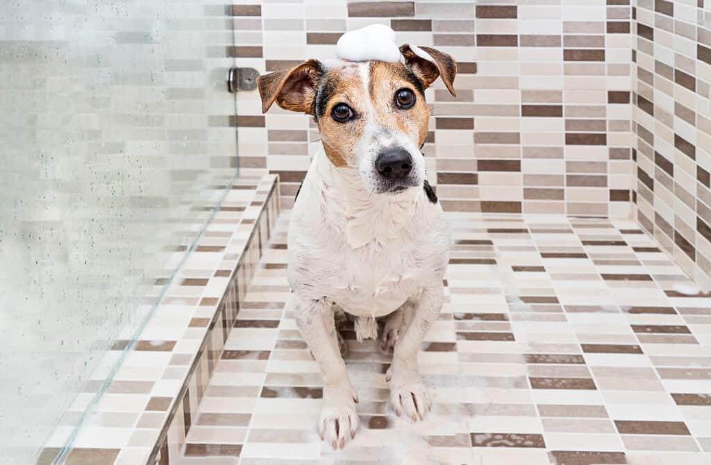 dog with oatmeal shampoo