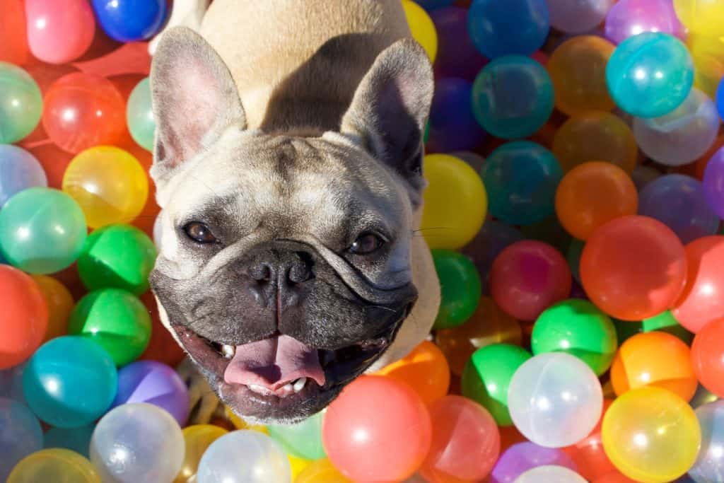Dog playing in a ball pit full of colorful water baloons