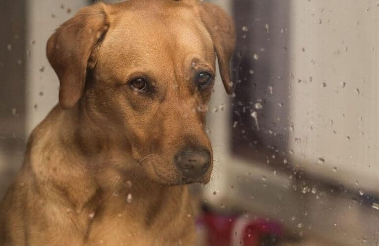 dog looking through the glass in the rain