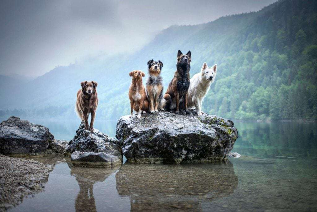 dogs sitting on a rock above water