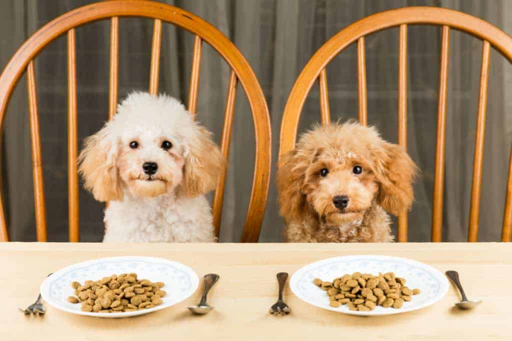 two dogs eating their dog food on the table