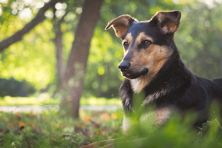 dog outdoors surrounded by gnats
