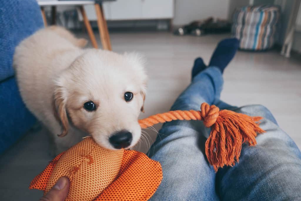 playing with a new puppy